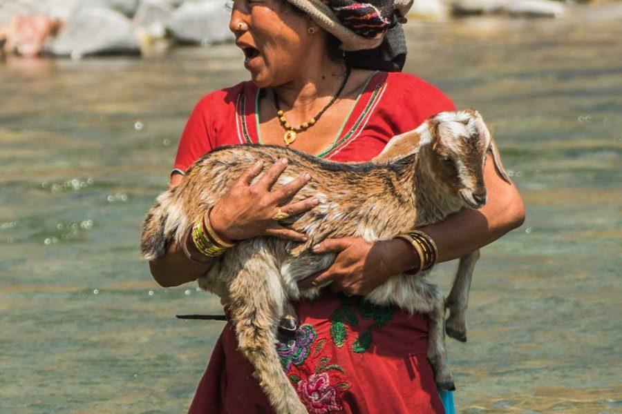 Woman carrying a goat crossing a river - WildWorldSafaris.com