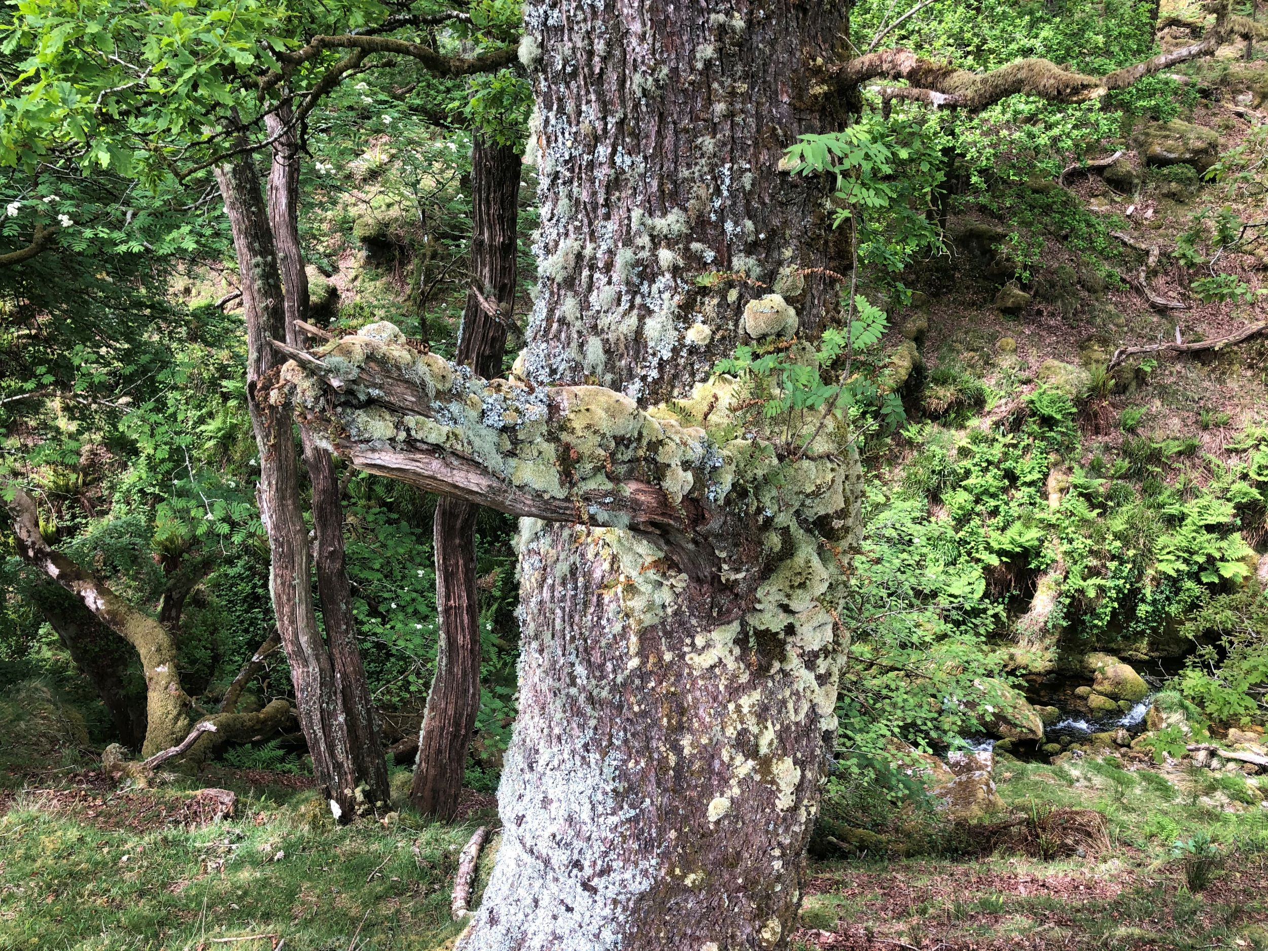 The Giving Trees | Discovering Tree Communities on Tours