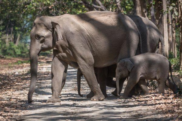 39692892640-Varun-Mathur--inr_elephant_familyR