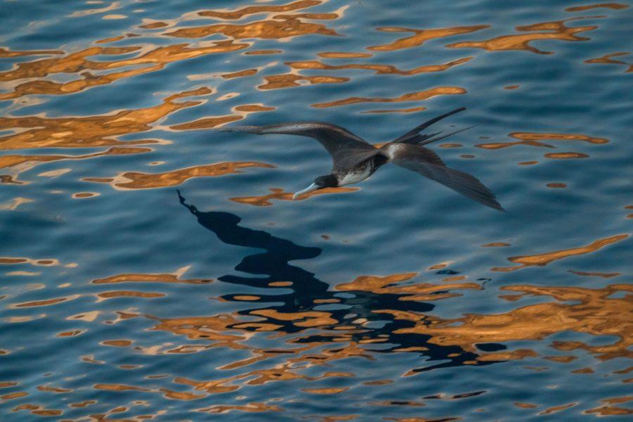 rod-long-lFQoGTpHQuk-unsplash_Galapagos.jpg